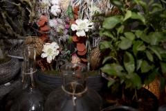 Mooi_groen_bloem_bloemen_bloemenhuis