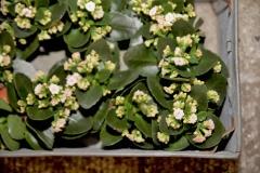 bloemen-huis-mooi-groen-2