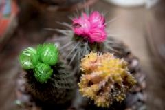 mooi-groen-bloemen-10