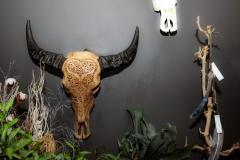 mooi-groen-bloemen-huis-binnen-schedel
