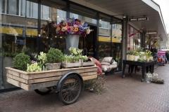 mooi-groen-bloemen-huis-buiten(2)