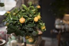 mooi-groen-bloemen-impressie-bloemenhuis